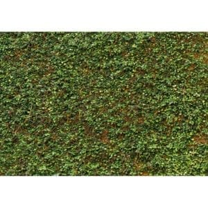 FOTOMURAL IVY WALL 979