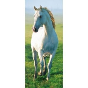 FOTOMURAL WHITE HORSE 514